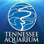 Tennessee Aquarium Promo Codes & Deals 2021